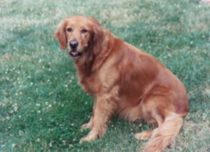 Bettie's dog