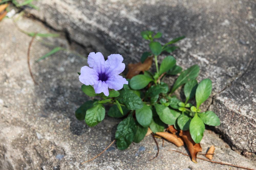Flowers growing in rocks