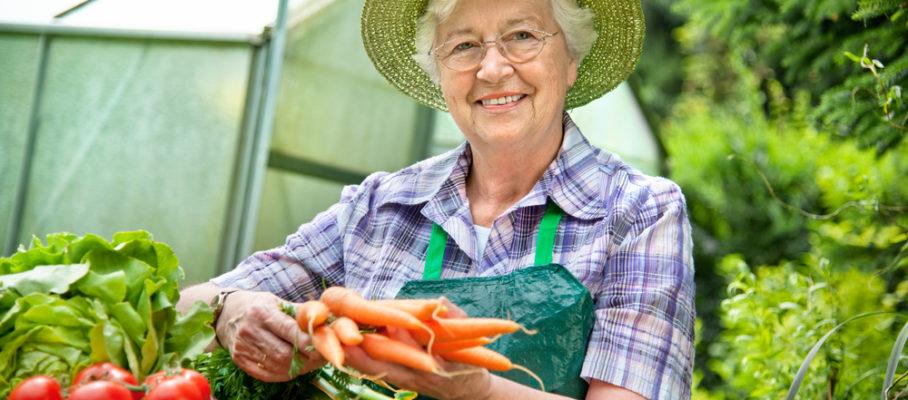 Women Harvesting Vegitables
